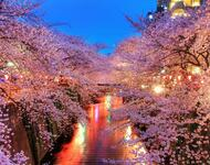 Newest Japan Sakura Blossom Wallpapers Природа, Wallpapers Sakura blossom, Wallpapers Japanese Sakura, Wallpapers flowers, Wallpapers Japan id1779184836