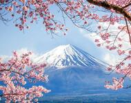Newest Japan Sakura Blossom Wallpapers Природа, Wallpapers Sakura blossom, Wallpapers Japanese Sakura, Wallpapers flowers, Wallpapers Japan id227641321