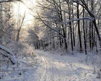 The best winter wallpaper on your desktop / part 2 Природа, The best winter wallpaper on your desktop, Desktop Wallpapers, Winter, Forests, Sunset, Sunrise id1803113238