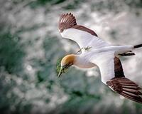 Экзотические Птицы в природе Природа, Птицы, Экзотика id159618032
