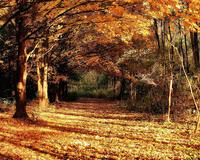 Избранные Обои Золотой Осени Природа, Лес, Осень id1945490450